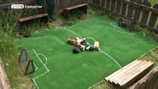 Накануне ЧМ по футболу в Зоопарке Удмуртии в первом домашнем матче сразились команды морских свинок